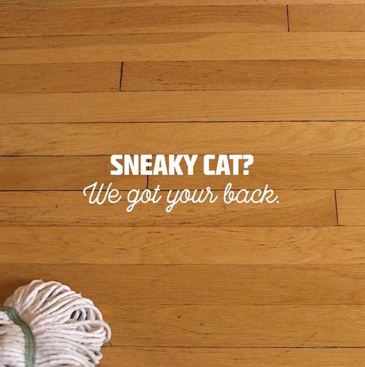 Sneaky Cat video